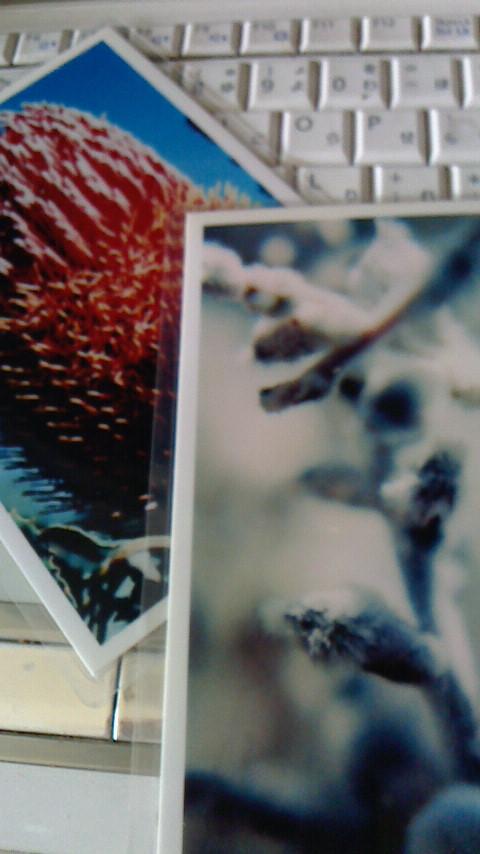 花カードimage.jpg